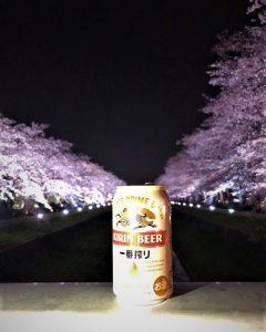 0327-kose-sakura